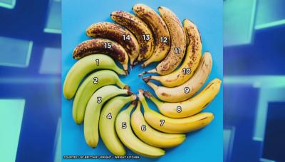 Bananas of varying colors labeled from 1 to 15